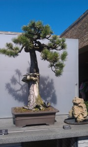The Bonsai Trees were especially appropriate after our Karate Kid watching