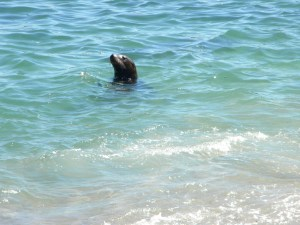 I see a seal!