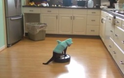 cat-shark-roomba-1